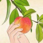 Peach on a tree